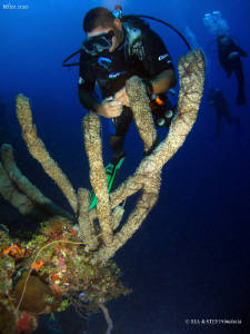 Alex looking at Brittle stars on sponges. Half Moon Caye,... by Bea &amp; Stef Primatesta 